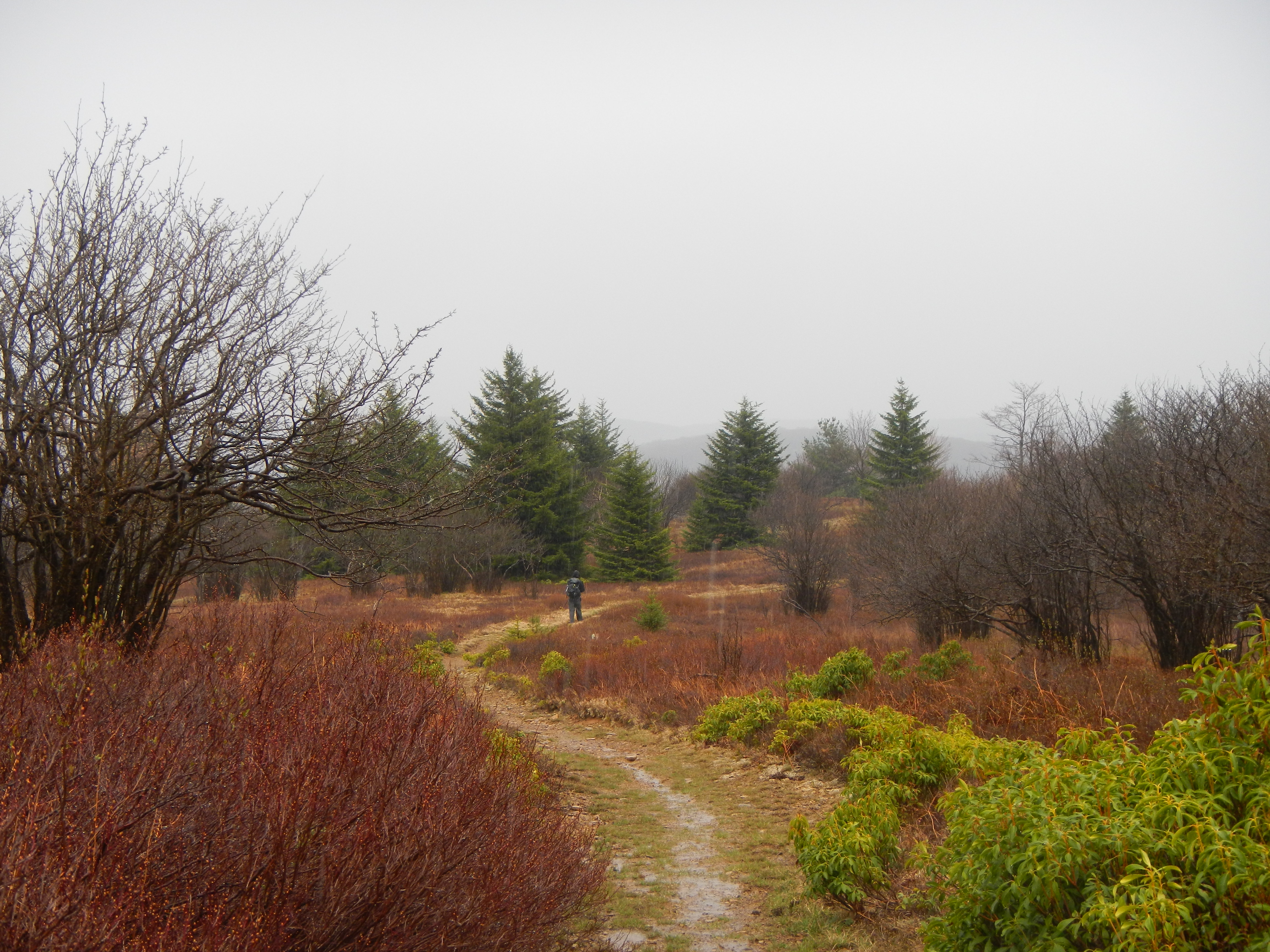 Hiking the Dolly Sods - Roads Rivers and Trails